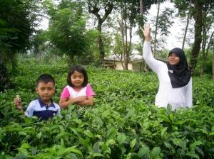 Bocah-bocah di tengah pohon teh siap petik